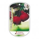 Acerola (Crataegus azarolus)