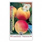 Albaricoque Bulida (Prunus armeniaca)