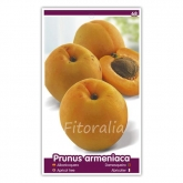 Albaricoque Moniqui (Prunus armeniaca)
