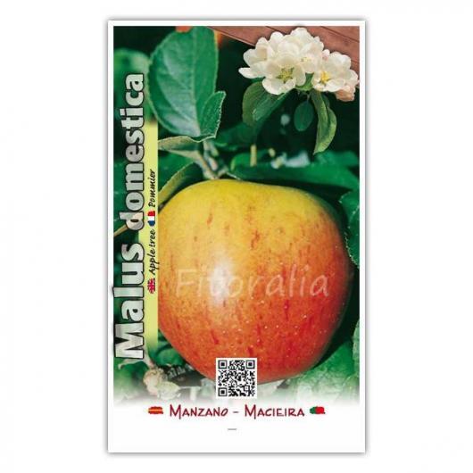 Manzano Gala (Malus domestica)