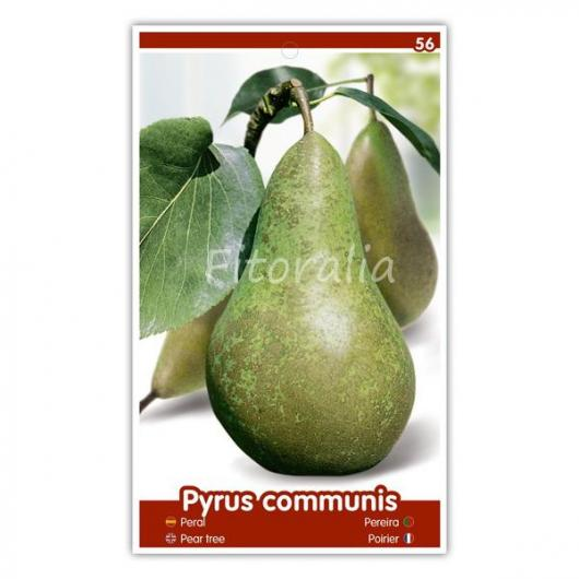 Peral Conference (Pyrus communis)