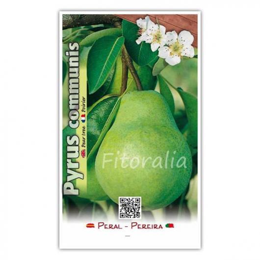 Peral Blanquilla (Pyrus communis)