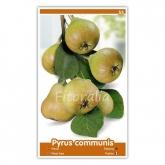 Peral Castell (Pyrus communis)