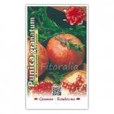 Granado Tendral de Jativa (Punica granatum)