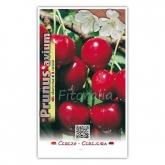 Cerezo Van (Prunus avium)