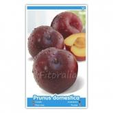 Ciruelo Frontier (Prunus domestica)