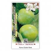 Ciruelo Claudia (Prunus domestica)