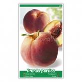 Melocotón Red Wing (Prunus persica)