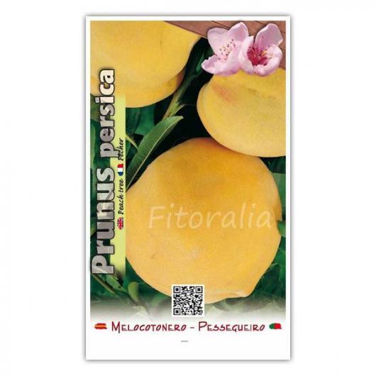 Melocotón Baby Gold 6 (Prunus persica) 54x43mm