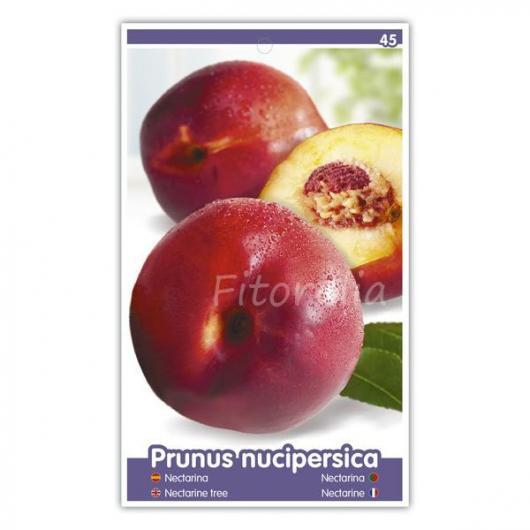 Nectarina Independence (Prunus nucipersica)