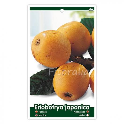Níspero Tanaka (Eriobotrya japonica)