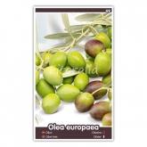 Olivo Manzanilla (Olea europaea)