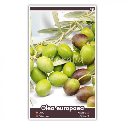 Olivo Alberquina (Olea europaea)
