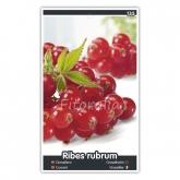 Grosella Roja (Ribes rubrum)
