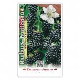 Mora (Rubus fruticosus)
