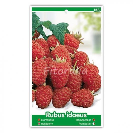 Frambuesa (Rubus idaeus)