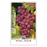 Parra Roja (Vitis vinifera)