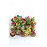 Cactus Variados con Flor Artificial, 1 ud