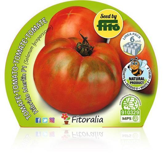 Plantón ecológico de Tomate Ensalada Híbrido Katon Pack 6 ud. 54x43mm