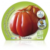 Plantón ecológico de Tomate Corazón De Buey Pack 6 ud. 54x43mm