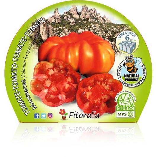 Plantón ecológico de Tomate Montserrat Pack 6 ud. 54x43mm