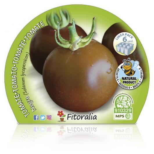 Plantón ecológico de Tomate Negro Pack 6 ud. 54x43mm