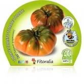 Plantón ecológico de Tomate Raf Pack 6 ud. 54x43mm