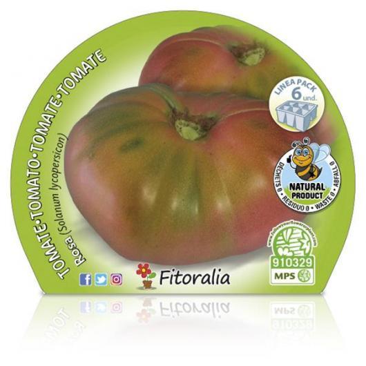Plantón ecológico de Tomate Rosa Pack 6 ud. 54x43mm