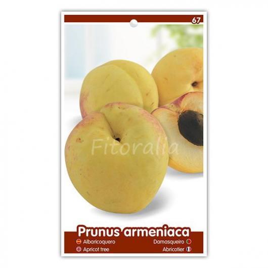 Albaricoque Canino (Prunus armeniaca)