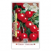 Cerezo Burlat (Prunus avium)