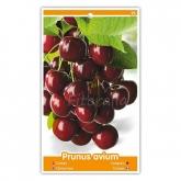 Cerezo Sunburst (Prunus avium)