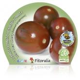 Plantón ecológico de Tomate Zebra Cherry Pear maceta 10,5 cm de diámetro