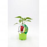Plantón Pimiento Palio injertado maceta 10,5 cm de diámetro