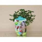 Pelargonio Aromático Esencia Manzana (Pelargonium)