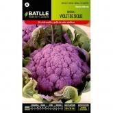 Graines de brocoli violet de Sicile