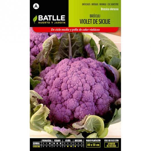 Semi di Broccolo Viola di Sicilia