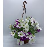 Surfinia -Colores surtidos- (Petunia Surfinia)