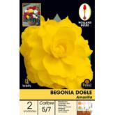 Bulbo di Begonia Doppia Gialla, 2 unità
