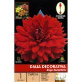 Bulbo Dalia decorativa rosso scarlatto