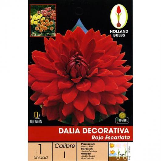 Bulbo Dalia decorativa roja escarlata 1 ud.