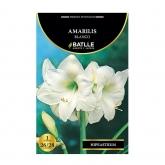 Bolbo Amarilis branco 1 ud