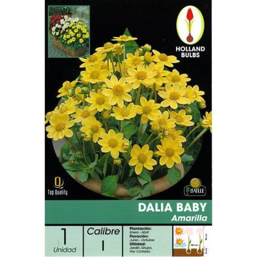 Bulbo di Dalia Baby giallo 1 unità