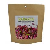 Kit de Rabanete germinado  em ágar-ágar, Garden Pocket