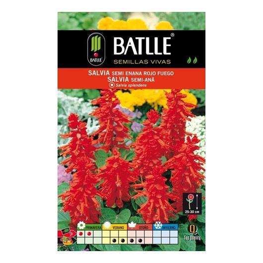 Semillas de  Salvia semi-enana compacta Rojo Fuego