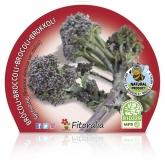 Plantón ecológico de Brócoli sprouting maceta de 10,5 cm de diámetro