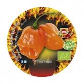 Plantón ecológico de Picante Habanero Naranja maceta 1L
