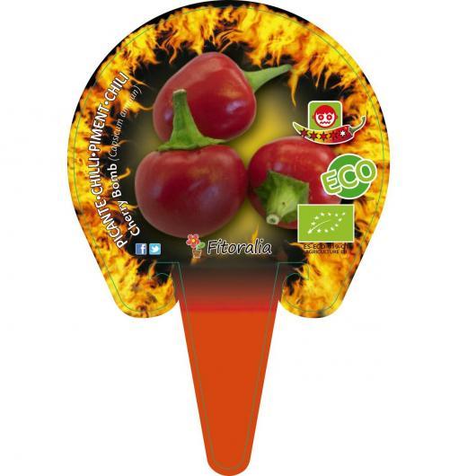Plantón ecológico de Picante Cherry Bomb maceta 1L