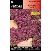 Graines d'alysson maritime annuel violet