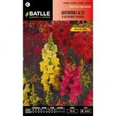 Graines d'antirrhinum haut grande fleur