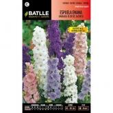 Graines de delphinium à fleur de jacinthe